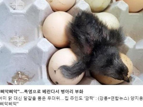 Telur Menetas Sendiri hingga Bantal Terbakar Jadi Fenomena Aneh Gelombang Panas Korea Selatan