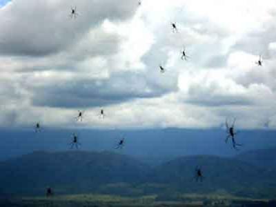 Aneh, Brazil Terjadi Hujan Laba-laba
