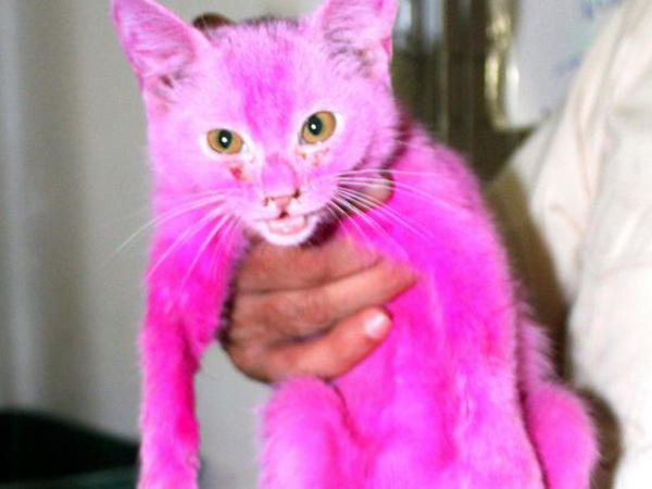 Dicat Warna Pink Terang, Kucing Ini Juga Ditelantarkan Tak Diberi Makan