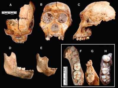 Bocah 9 Tahun Temukan Fosil Manusia Purba