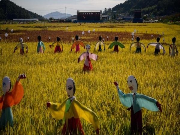 Kreatif, Pedesaan Ini Sebar Pesan Semangat Lawan COVID-19 dengan Media Sawah