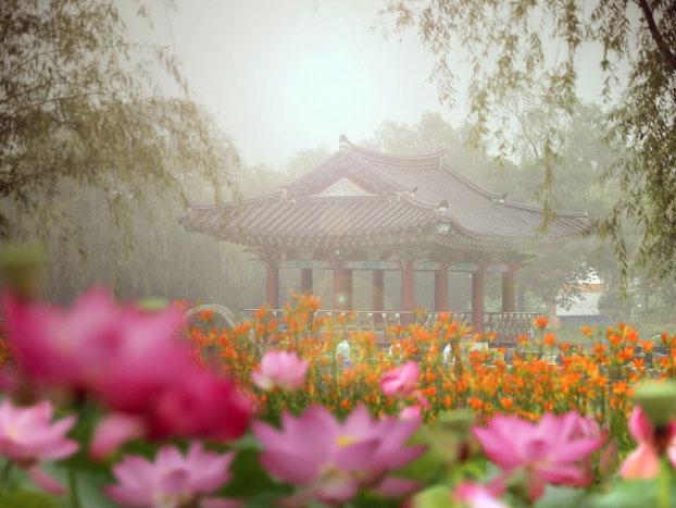 Suka Travelling? Yuk Berkunjung ke Buyeo Seodong Lotus Festival di Korea Selatan