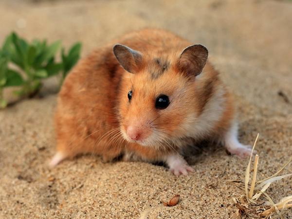 Ajari 'Arti Hidup' pada Siswa, Guru di Korea Ini Telan Hamster Hidup-hidup!