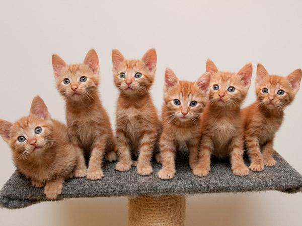 Pelihara Kucing? Ini 6 Manfaat yang Bisa Kamu Dapatkan