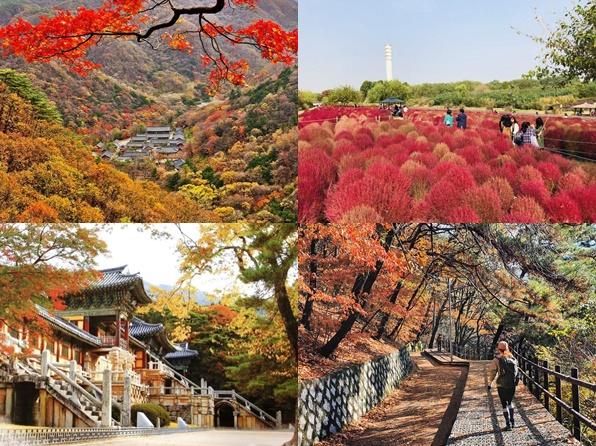 4 Tempat Terbaik Untuk Solo Traveler Selama Musim Gugur di Korea