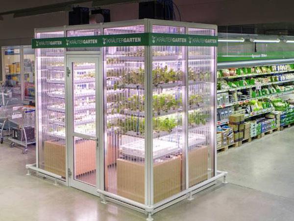 Menjaga Kesegaran, Sayuran Ini Ditanam Langsung di Dalam Supermarket