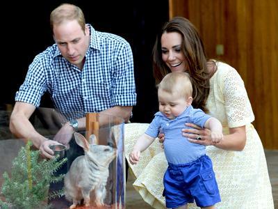 Gemas! Pangeran George Terlihat Senang Bermain dengan Hewan Langka Australia Bilby