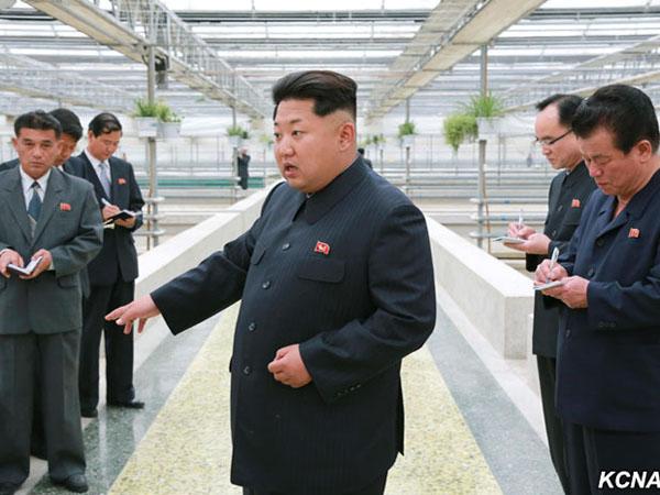 Kolam Kekurangan Air, Kim Jong Un Eksekusi Mati Peternak Kura-kura