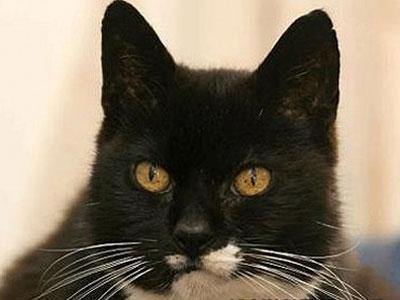 Wow, Kucing Tertua Didunia Rayakan Ultah Ke-28