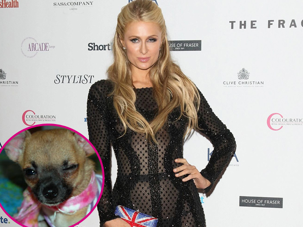Paris Hilton Adakan Pemakaman Untuk Tinkerbell di Beverly Hills