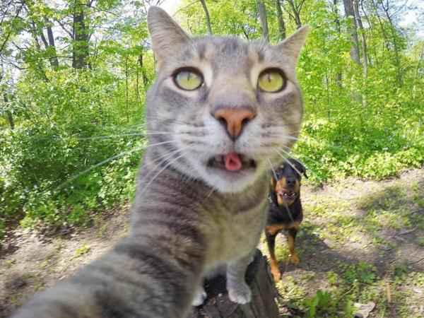 Kenalan dengan Kucing Menggemaskan yang Hobi Selfie, Manny