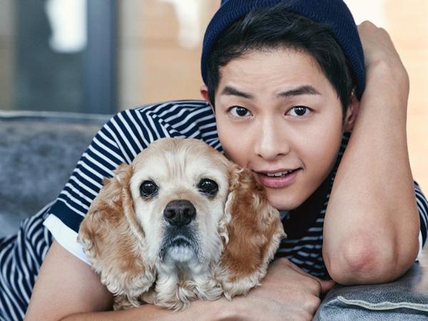 Tampannya Song Joong Ki Pose Bareng Anjing Menggemaskan di Pemotretan Majalah