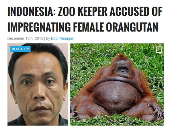 Media Asing Beritakan Orangutan Dihamili Penjaga, Kebun Binatang Surabaya Geram