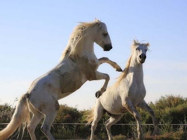 Sempat Jadi Serum Anti-bisa Ular, Antibodi Kuda Akan Digunakan Sebagai Obat Corona?