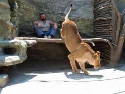 Demi Singa, Pria Ini Tinggal di Kandang Singa