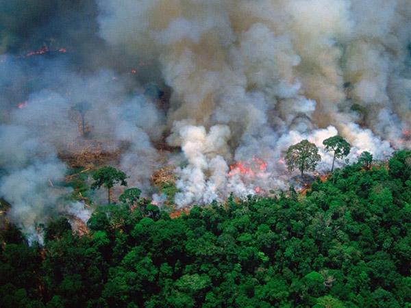 Ganasnya Kebakaran Hutan Amazon Selama Tiga Minggu yang Luput dari Sorotan Media