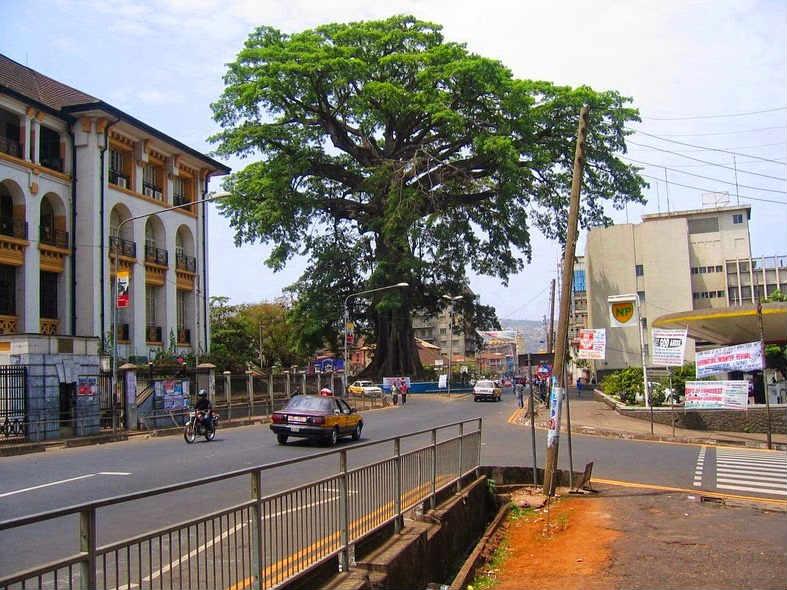 Berusia 500 Tahun Lebih, Pohon Kapas Ini Dijadikan Ikon Kota