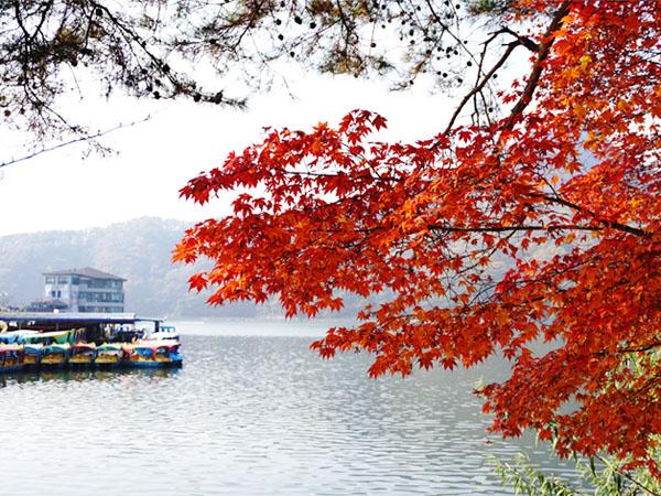 Jangan Takut Terlambat, Nikmati Musim Gugur Korsel di Penghujung Tahun Ini!