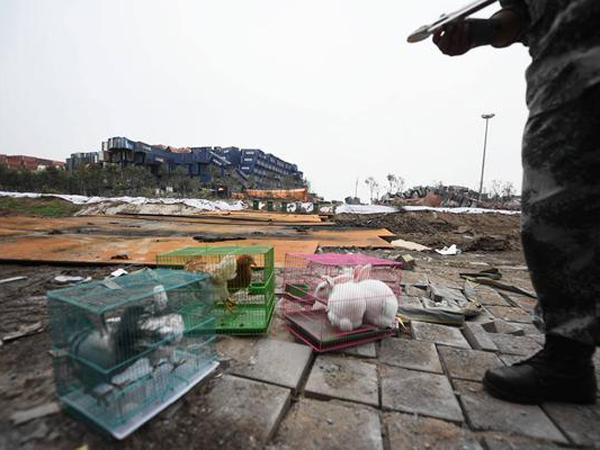 Duh, Pemerintah Cina Gunakan Hewan Untuk Uji Polusi Lingkungan di Tianjin!