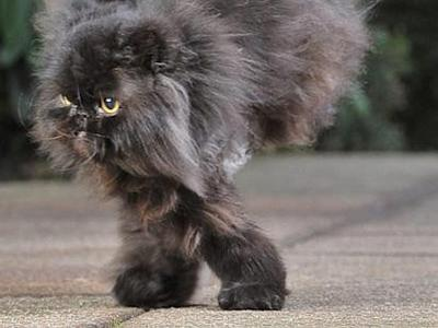 Caffrey, Kucing Berkaki Dua yang Menginspirasi Manusia