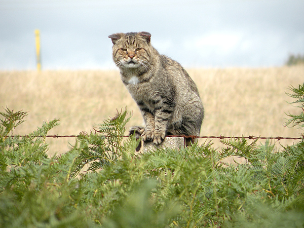 Oh No! Australia akan Bantai Dua Juta Kucing Liar!