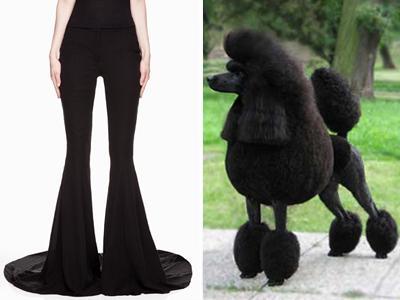 Berani Pakai Celana Gaya Anjing Poodle Ini?