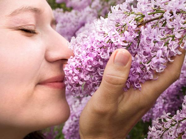 Mencium Aroma Manis Sebelum Tidur Bisa Buat Kamu Mimpi Indah