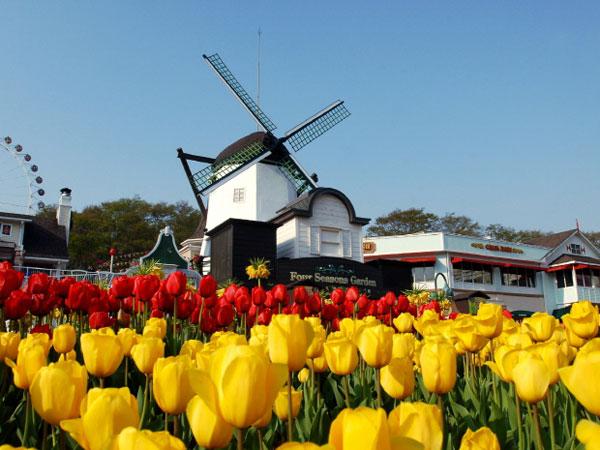 Jadi Saksi Mekarnya 1.2 Juta Bunga Tulip di Everland Korea Selatan!