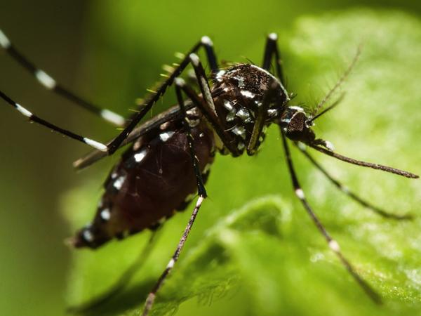 Sebelum Panik, Simak Dulu Fakta Dasar Virus Zika yang Perlu Diketahui ini