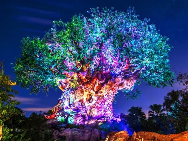 Menikah Layaknya Karakter di Negeri Dongeng, Dibawah Tree Of Life Disney World