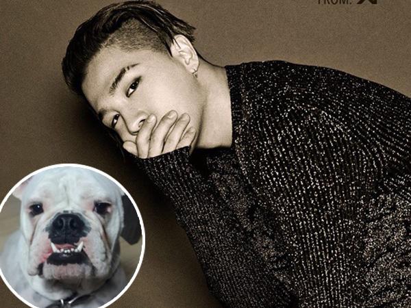 Duh, Anjing Keluarga Taeyang Big Bang Hilang Diculik Orang Tak Dikenal!
