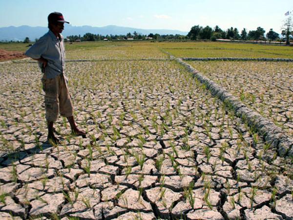 Kekeringan, Ribuan Hektare Sawah di Jawa Barat Terancam Gagal Panen
