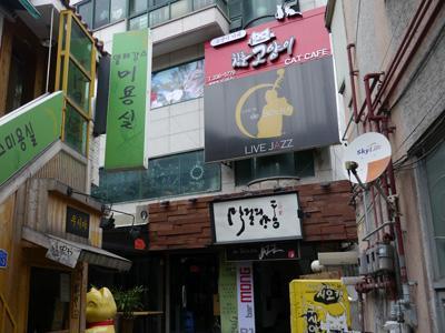 Gio Cat Cafe, Cafe Bagi Pecinta Kucing Ala Korea Selatan