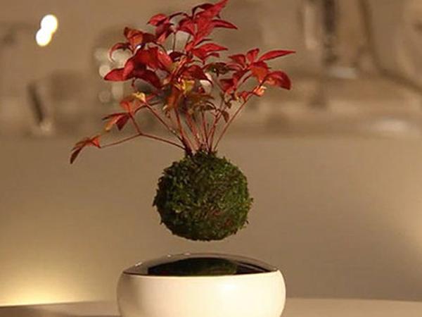 Wow, Jepang Ciptakan Bonsai yang Bisa Melayang di Udara!