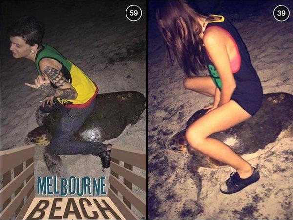 Tunggangi Penyu di Pantai Sepanjang Malam, Wanita Muda Ini Ditahan