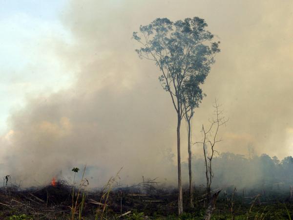 Setelah Amerika dan Cina, Indonesia Akan Jadi Penyumbang Polusi Terbesar di Dunia