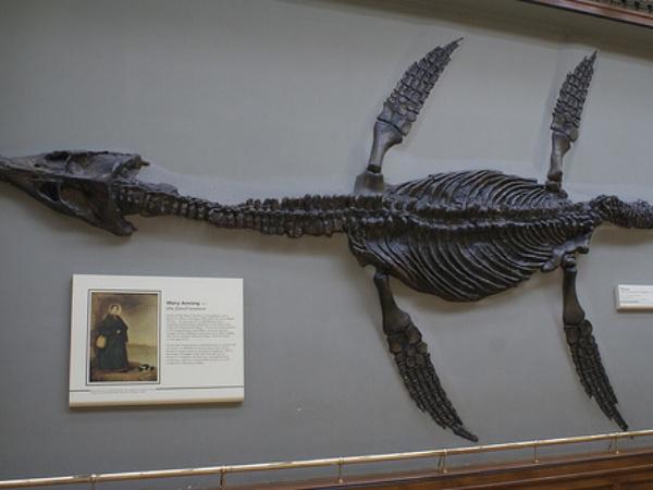 Ilmuwan Temukan Fosil 'Monster' Laut, Peneliti: Seperti Buaya Super Besar!
