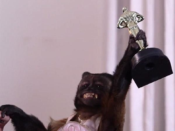 Sudah Tahu 'Pawscars', Ajang Penghargaan Oscar untuk Binatang?