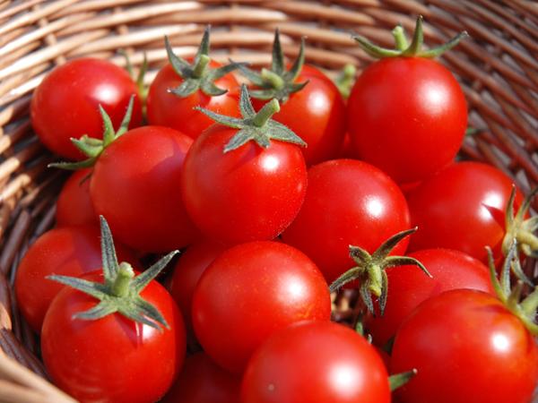 Redakan Galau dengan Makan Tomat Yuk!
