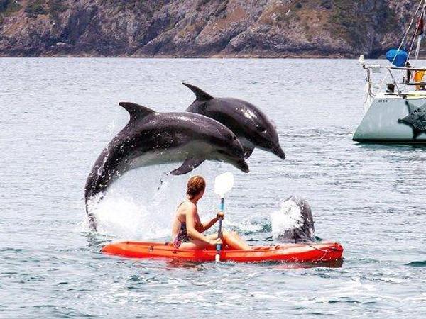 Selandia Baru Larang Turis Berenang Dekat Lumba-lumba, Ini Alasannya