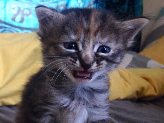 Setelah Grumpy Cat dan Venus, Kucing Ini Akan Menjadi Favorit Seluruh Dunia