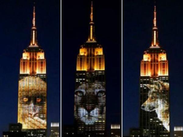 Kampanye Hewan Terancam Punah, Empire State Tampilkan Gambar Hewan Langka