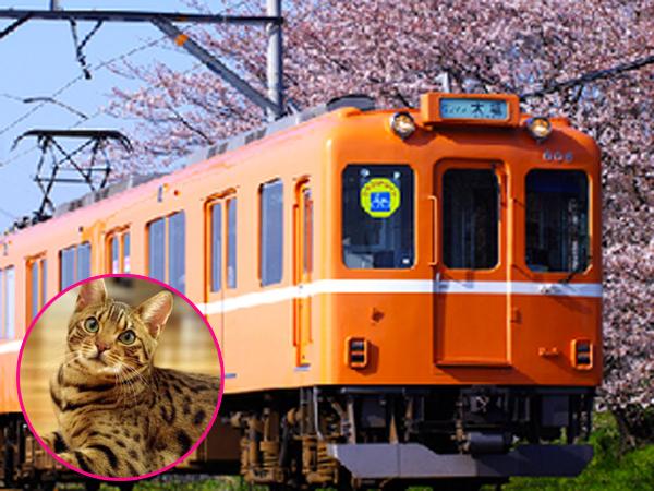 Kafe Ini Tawarkan Sensasi Makan Sambil Main Bersama Kucing di Dalam Kereta