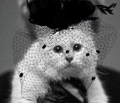 Kehidupan Mewah Choupette, Kucing Karl Lagerfeld yang Dapat Warisan Rp 2,7 triliun