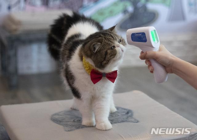 Kasus Kucing Positif Corona Pertama Ditemukan di Seoul