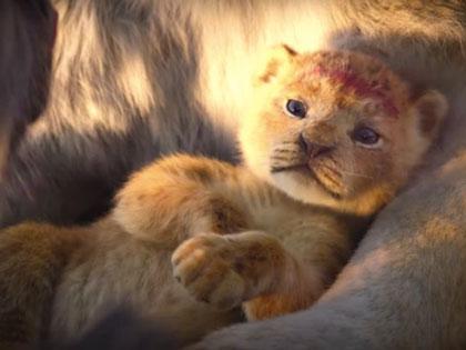 Trailer Baru Film 'The Lion King' Live Action Bikin Penonton Makin Antusias