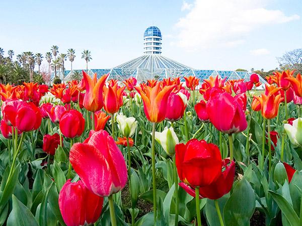 'Spring Day' is Coming! Begini Cara Asyik Sambut Musim Semi di Korea Selatan