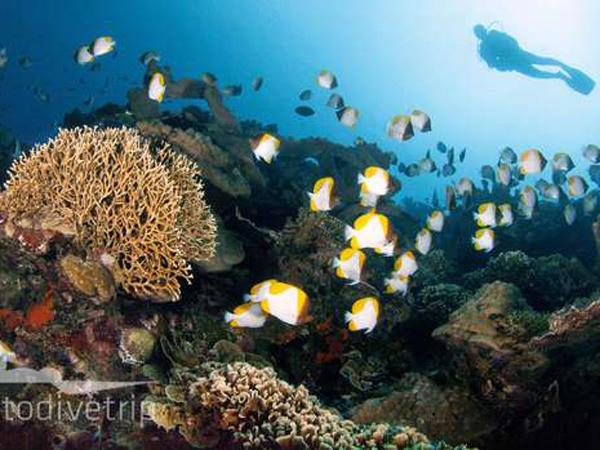Keren, Indonesia Jadi Destinasi Snorkeling Terbaik Dunia!