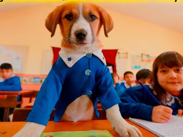 Jadi Anjing Kesayangan, Viral Kematian Findik Tuai Perhatian Masyarakat Turki