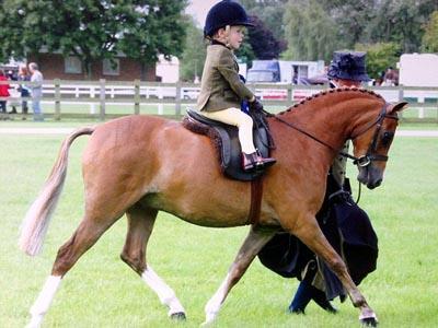 Wow, Balita 3 Tahun Ikut Turnamen Menunggang Kuda Bergengsi
